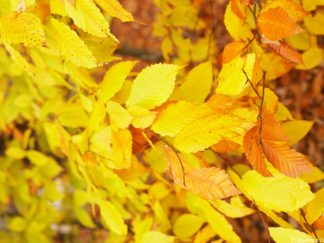 Autumn Colour Friday Freebie Printable Paper